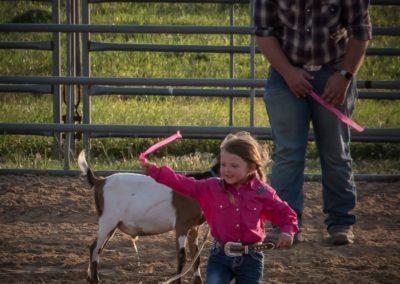 Goat Ribbon Pulling2